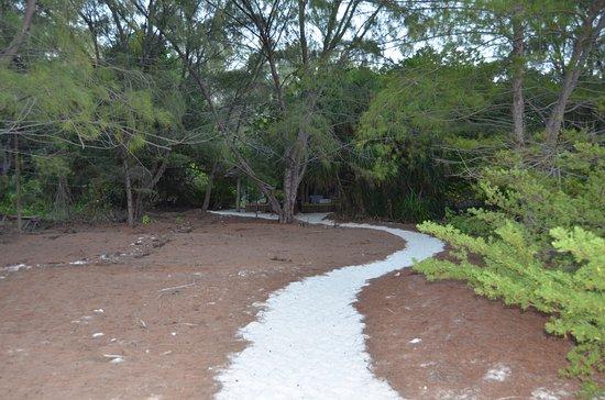 Mnemba Photo