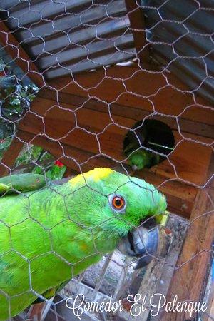Comedor el Palenque