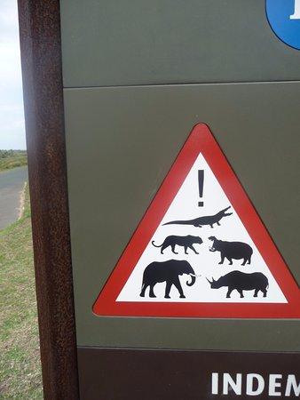 St Lucia, Sudafrica: danger animals