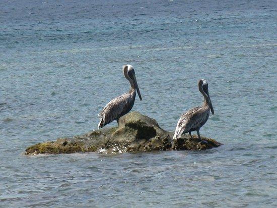 Terre-de-Haut, Guadeloupe: Dessus...