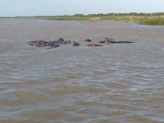 St Lucia, Sudáfrica: hippos