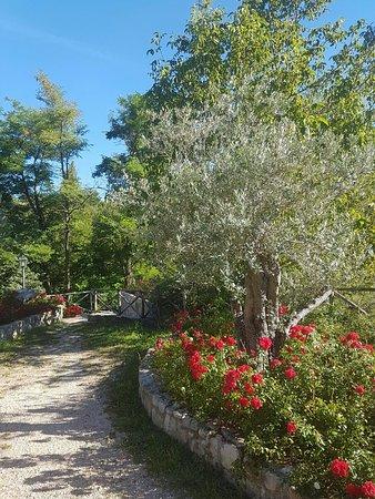 Le Querce di Assisi: IMG-20160819-WA0009_large.jpg