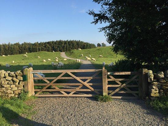 Northumberland, UK: photo9.jpg
