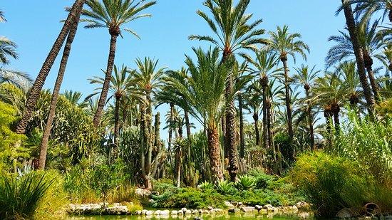 Huerto Del Cura Jardin Artistico Nacional