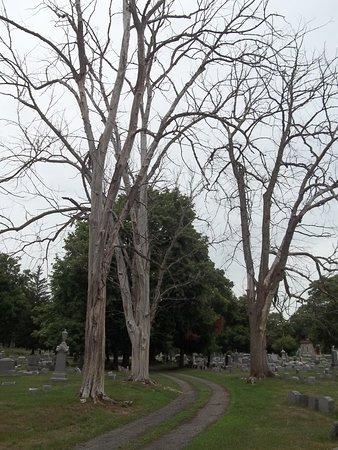 Elmira, estado de Nueva York: Dirt Lane Through Dead Trees