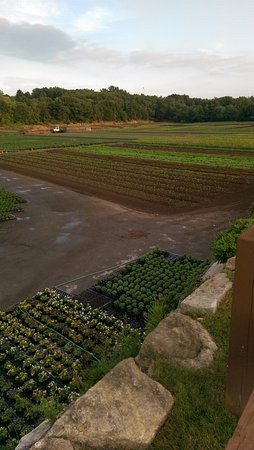 Lexington, MA: A view of some of the local fields, the Kale and Greens they sell are grown right HERE!