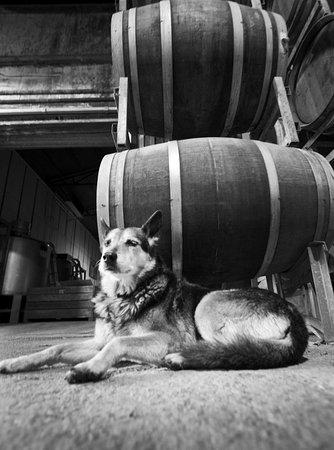 Balnarring, Australia: Guarding the barrels.