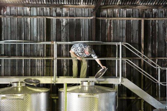 Balnarring, Australia: Checking ferments