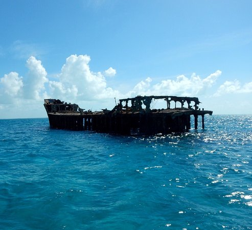 Bimini: We went on great snorkeling charters to see the Sapona and Reef Sharks!