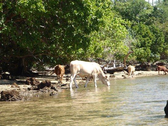 Espíritu Santo, Vanuatu: The mouth of the river