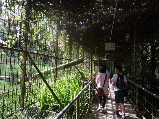Semanggol, ماليزيا: このような金網で囲まれた通路を歩いて保護区を巡ります