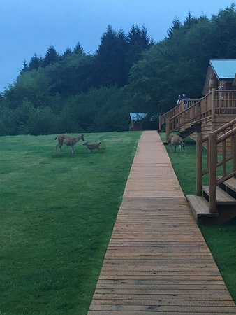 Delta, Canada: Deer are walking around constantly.