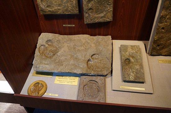 Ipolytarnoc, Magyarország: Lábnyomok ősálatoktó (Orrszarvú)