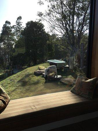 Lilydale, Αυστραλία: photo9.jpg