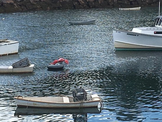 Perkins Cove: photo4.jpg
