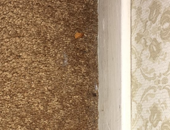 Blackberry Inn: Crumbs on carpet near baseboard. More inattention by the cleaners.
