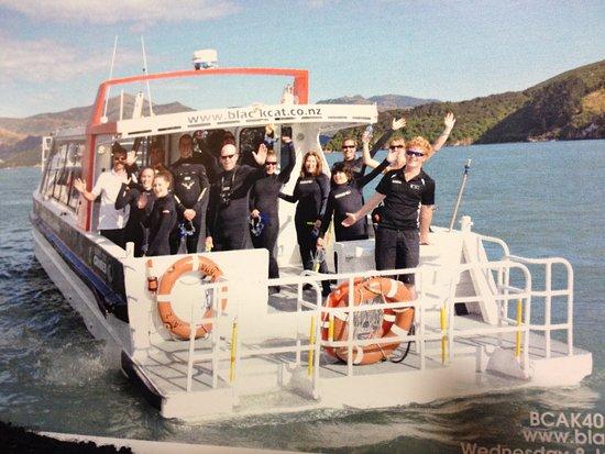 Akaroa, Nova Zelândia: Nadando con delfines