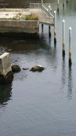 ดีโพเบย์, ออริกอน: A misty day at Depoe Bay, still beautiful and we saw a seal napping
