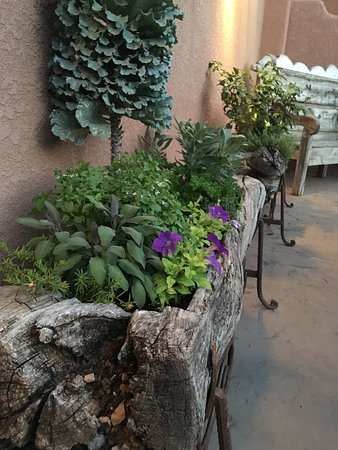 Gateway, CO: Beautiful flowers, they do a great job keeping up the grounds.