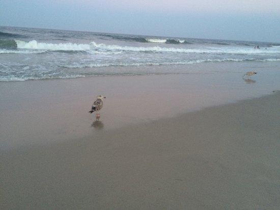 Seaside Park, NJ: photo0.jpg
