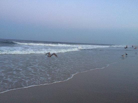 해변 공원 사진