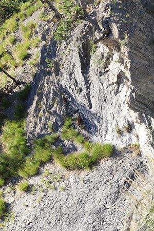 Chandolin, สวิตเซอร์แลนด์: chamois vus de la passerelle