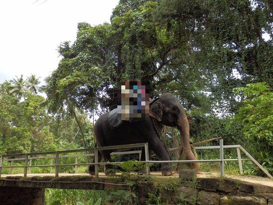 Kegalle, Sri Lanka: Elephant Ride at Millennium Elephant Foundation