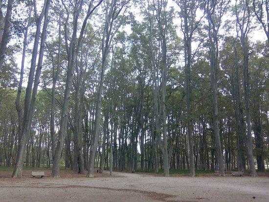 Parque de la Dehesa (Parc de la Devesa): La Devesa