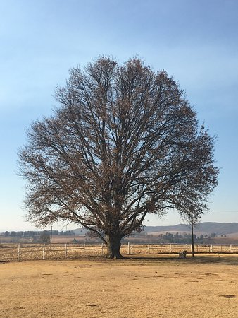 Himeville, Sydafrika: photo2.jpg
