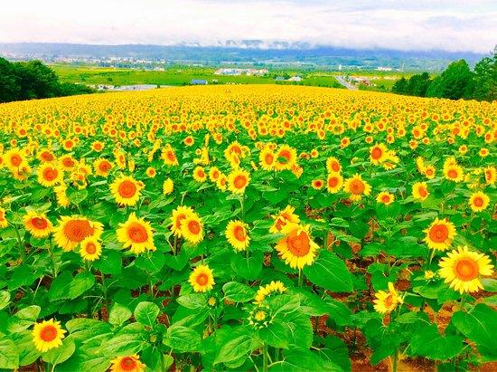 Sun Pillar Park: 北海道立サンピラーパーク