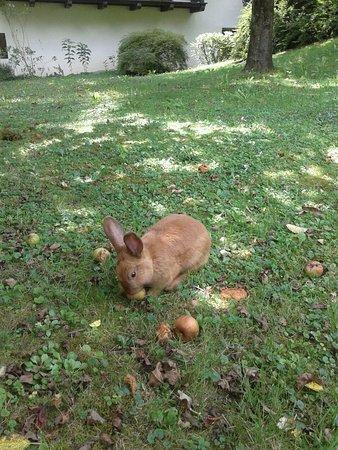 Campodazzo, Italien: Non è da mangiare...coniglio domestico!!