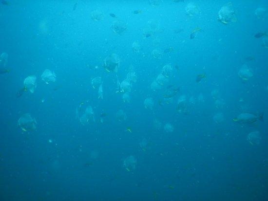 Phangan International Diving School : image-0-02-01-d95e65aded8931d3bafb40a00b19c796dfb3bcb2c987b231980007075df6afcb-V_large.jpg