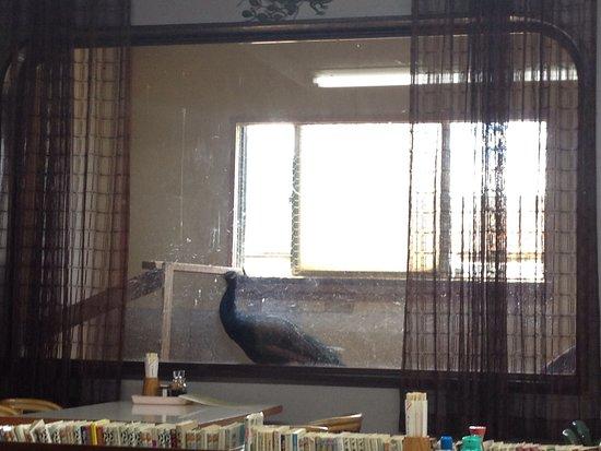 Tsubame, Japón: photo2.jpg