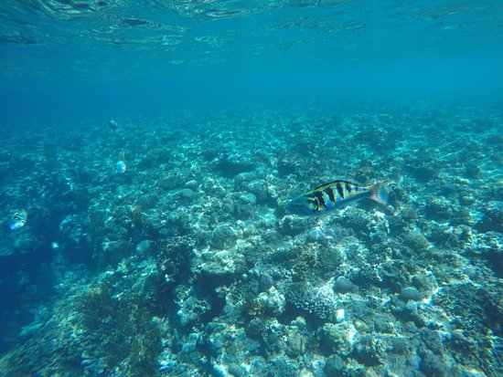 Lovina Beach, Indonesia: Underwaterlife near Manjagan Island 🐠🐟🐡