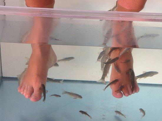 Hug Bucket Fish Spa: IMG_0633_large.jpg
