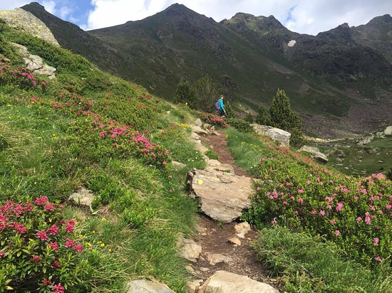 Tristaina Lake Trail : Sub-Alpine wild flowers and shrubs are everywhere on the highland!