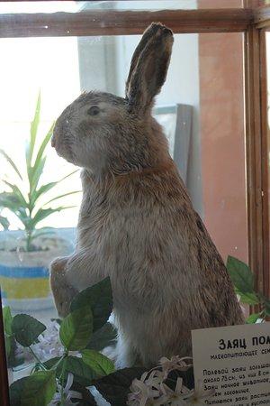 Pugachev, Russia: Чучело зайца