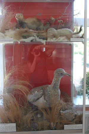 Pugachev, Russia: Чучела птиц и животных