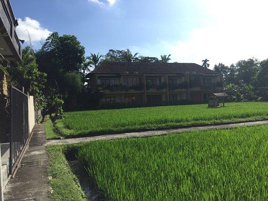 Bayu Guest House : photo2.jpg
