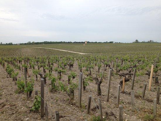 Pauillac, فرنسا: Un vignoble en biodynamie ;-)