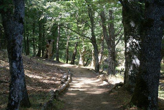 Montejo de la Sierra, España: Interior del hayedo, la senda