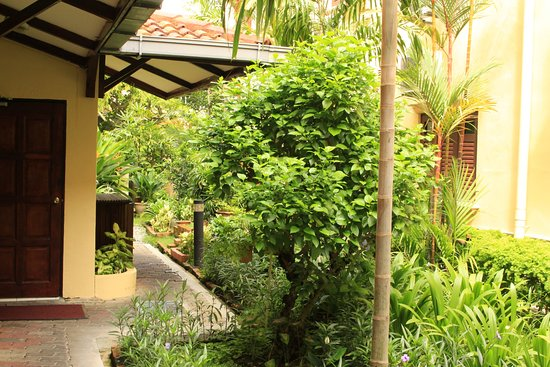 Bilde fra Hotel Puri