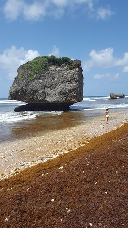 Christchurch, Barbados: Mushroom Rock at Bathsheba Beach