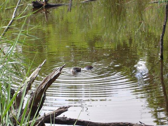 Le Teich