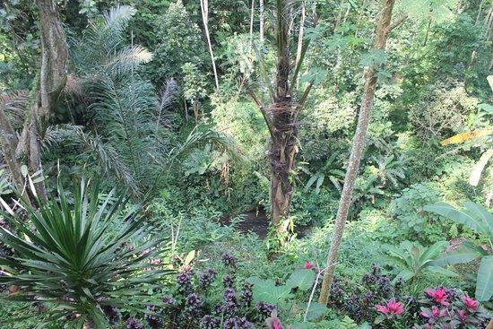 Bilde fra Tegalalang