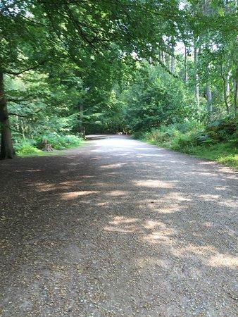 Delamere Forest: photo5.jpg