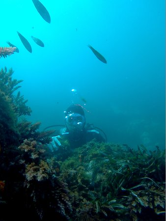 الجزائر العاصمة, الجزائر: baptême plongée sous marine