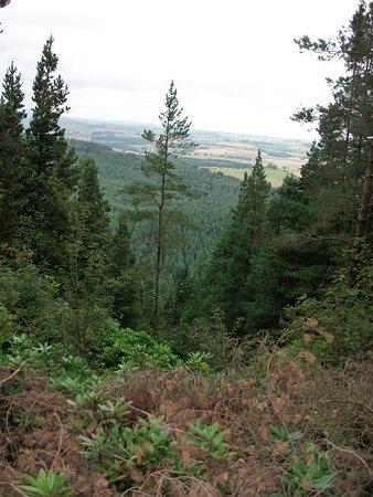 Fram Park: Thrunton Woods