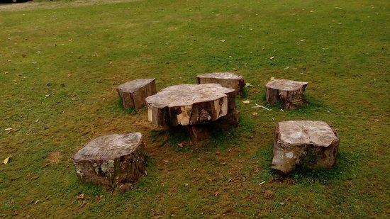 Saltram Gardens (National Trust): IMG_20160821_134538_large.jpg