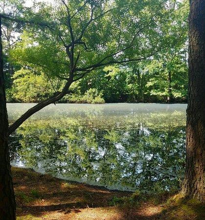 Clayton, Karolina Północna: 20160820_113552_large.jpg